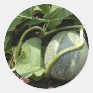 Cantaloupe on the Vine Round Sticker