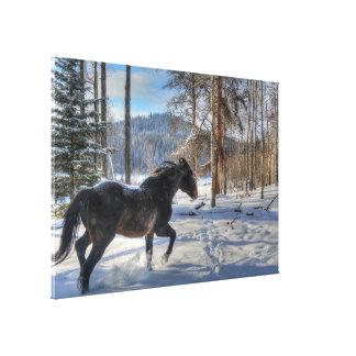 Cantering Black Percheron Horse & Snow Photo 2 Stretched Canvas Prints