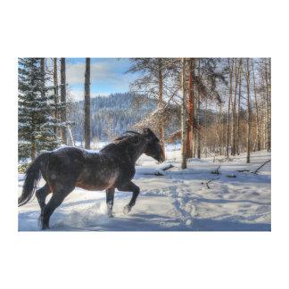Cantering Black Percheron Horse & Snow Photo 2 Gallery Wrapped Canvas
