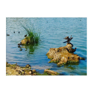 "Canvas ""Birdlife on Lake"" Acrylic Print"