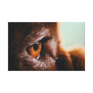 Canvas French Mastiff Eye (macro)