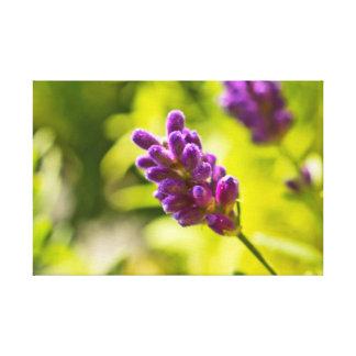 Canvas - Lavendel