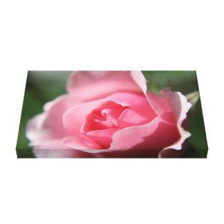 Canvas Pink Rose