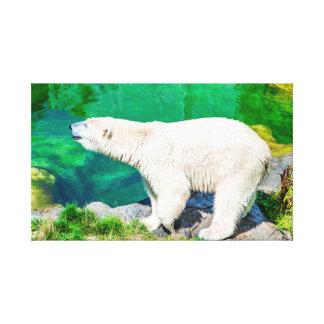 Canvas polar bear