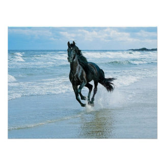 Canvas poster black horse