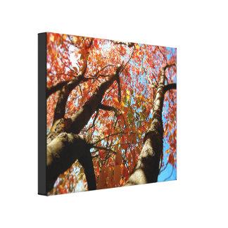 Canvas Print - Autumn Tree Tops