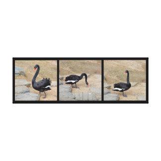 Canvas Print - Black Swan