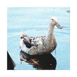 Canvas Print - Duck in Blue