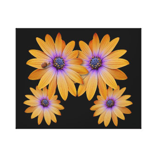 Canvas Print - Golden Daisy