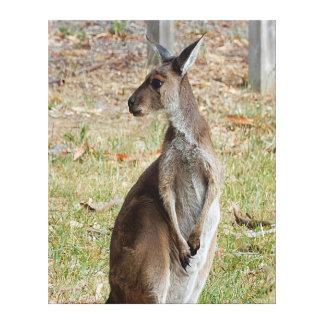 Canvas Print - Kangaroo