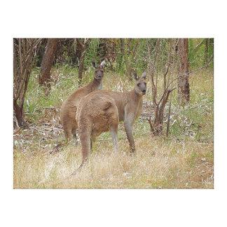 Canvas Print - Kangaroos in the Bush