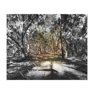 Canvas Print - Light in the Forest