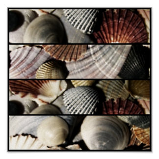 Canvas Print Sea shell Design