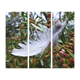 Canvas Print - White Feather