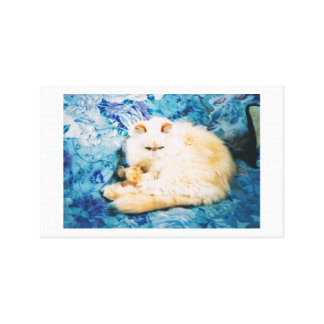 Canvas Print with Persian Cat
