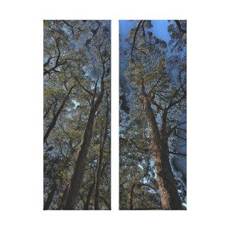 Canvas Print - Woodlands