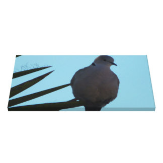 Canvas wall art Mourning Dove Stretched Canvas Print
