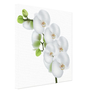 Canvas Wall Art-White Orchids Canvas Print