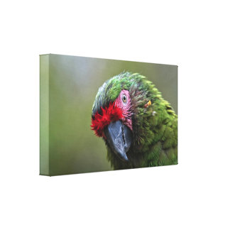 Canvas Wrap: Military Macaw Gallery Wrap Canvas