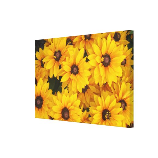 Canvas - Wrapped - Gloriosa Daisies Stretched Canvas Print