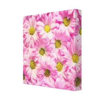 Canvas - Wrapped - Pink Gerbera Daisies
