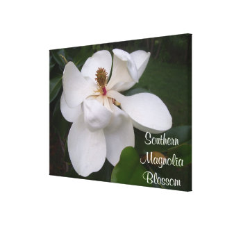 Canvas - Wrapped - Southern Magnolia Blossom l Gallery Wrap Canvas