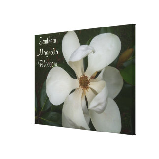 Canvas - Wrapped - Southern Magnolia Blossom ll Stretched Canvas Prints
