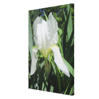 Canvas - Wrapped - White Iris In Sun Canvas Print