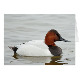 Canvasback Duck Drake Card