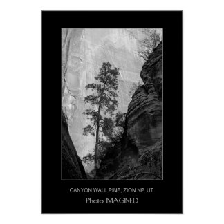 CANYON WALL PINE, ZION NP, UT. POSTER