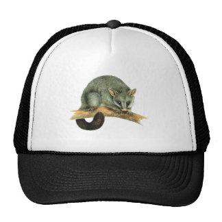Cap - cooroy possum