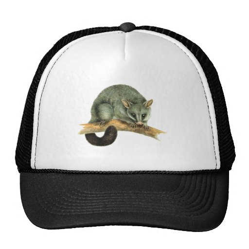 Cap - cooroy possum trucker hat