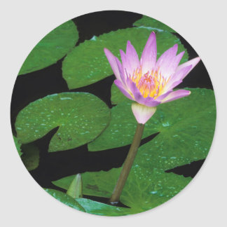 Cape Blue Water Lily (Nymphaea Capensis) Round Sticker