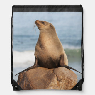 Cape Fur Seal resting on a rock Backpacks
