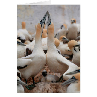 Cape Gannet pair fencing Card