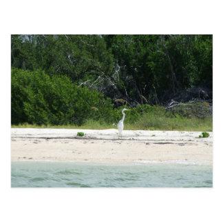 Cape Sable ,Fl. Postcard