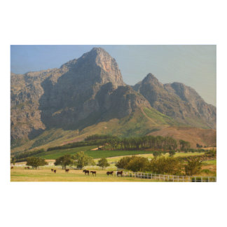 Cape Town, Western Cape, South Africa Wood Canvases