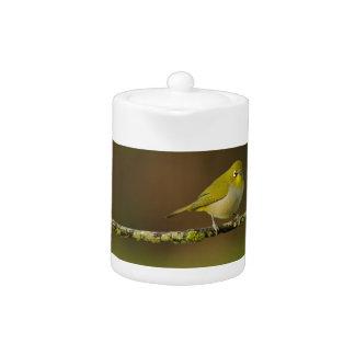 Cape White-Eye Bird Perched