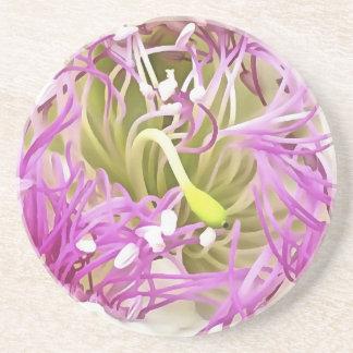 Caper Flower Blossom Coaster