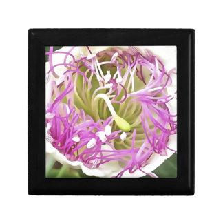 Caper Flower Blossom Gift Box