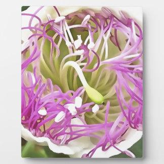 Caper Flower Blossom Plaque