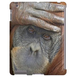 Captive female Sumatran Orangutan