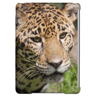 Captive jaguar in jungle enclosure 2 iPad air cover
