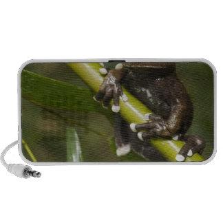 Captive Tapichalaca Tree Frog Hyloscirtus 2 iPod Speaker