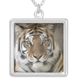 captive Tiger, Folsom City Zoo Sanctuary, Silver Plated Necklace