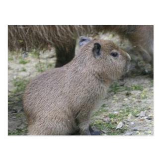 Capybara Babay Postcard