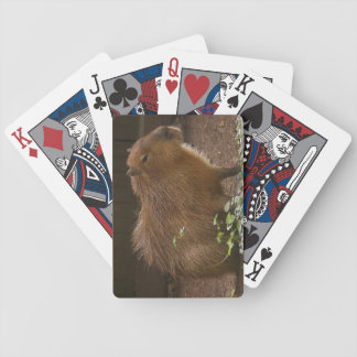 Capybara Bicycle Playing Cards