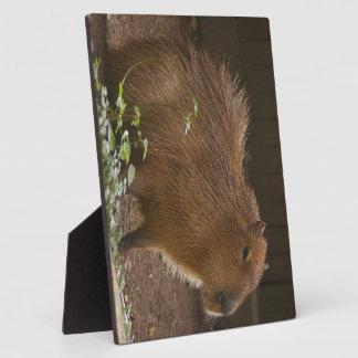Capybara Plaque