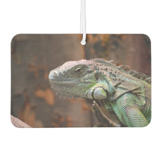 Car Air Fresheners with awesome Iguana lizard