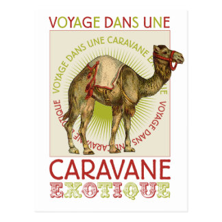 Caravan Camel Postcard